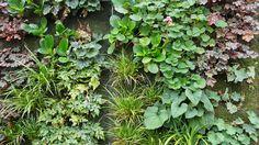 MOOOZ Outdoor Green Wall | MOOOZ is uw partner in gevel- en dakgroen