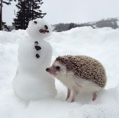 Biddy the Hedgehog and the snowman