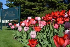 The Petoskey Garden Club keeps downtown Petoskey looking beautiful!  #PetoskeyArea  http://www.PetoskeyArea.com