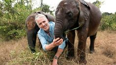 Kenya 🇰🇪 The cutest TV show you'll ever see: The antics of these adorable baby elephants will melt your heart says filmmaker Gordon Buchanan who spent weeks with them in Kenya Wild Elephant, Elephant Family, Keystone Species, Herd Of Elephants, David Sheldrick Wildlife Trust, Bbc Two, Wild Dogs, Hyena, All Gods Creatures