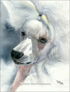 White Poodle Watercolor Print by k9stein on Etsy