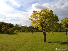 Le foglie si tingono di giallo, di rosso, arancione e marrone: uno spettacolo.