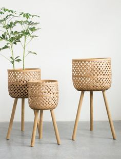 Positioned on solid wood dowel legs, the Studios Round Bamboo Floor Baskets with Wood Legs - Set of 3 gives a nod to mid-century modern design. Plant Basket, Bamboo Basket, Basket Planters, Wicker Baskets, Baskets For Plants, Estilo Tropical, Bamboo Furniture, Diy Furniture, Bamboo Plants