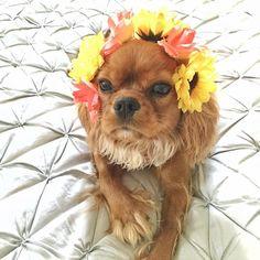 I'm ready for concert season  flower crown  #soundcheck #cavatude #groupie #cavlife #flowercrown by fionarubycavalier