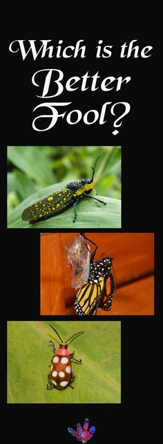 Cast your vote for which bug should be the Fool in my Arthropoda Tarot deck