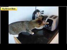Best Cat Videos 2016 Compilation - Funny cat and kitten Compilation fails videos - http://positivelifemagazine.com/best-cat-videos-2016-compilation-funny-cat-and-kitten-compilation-fails-videos/ http://img.youtube.com/vi/BmvUC7VTCRo/0.jpg                                             Best Cat Videos 2016 Compilation – Funny cat and kitten Compilation fails videos Funny compilation of cat videos 2015, enjoy these videos are hilarious.    source