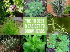 The 10 Best & Easiest To Grow Herbs