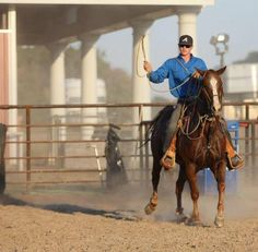 Jury Finds Cox Guilty in SAU Horse Theft, Sentenced to 60 Years | Rate My Horse PRO