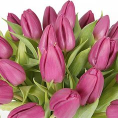 30 Purple Tulips with Vase http://www.serenataflowers.com/en/uk/flowers/next-day-delivery/product/107455/30-purple-tulips-with-vase?refPageID=5045&refDivID=6|center|product-set|category-list|4x5|1+++2|4|product|107455|image|140x140|standing|3|4|standard|