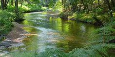 De Biesbosch.  In 1421 vond één van de ergste stormvloeden in Nederland plaats, de Sint Elisabethsvloed. In het zuidwesten van ons land kunnen we hiervan nog verschillende sporen terugvinden. De Groote Waard, een gebied te vergelijken met de Alblasserwaard, liep onder en verdronk, het werd een binnenzee; de Biesbosch.  Door latere dijkdoorbraken breidde de Biesbosch zich steeds uit, ook stroomde er water binnen via het Haringvliet en het Krammer Volkerak
