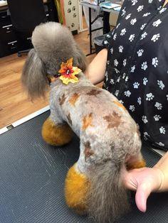 -repinned- Fall themed creative dog grooming.