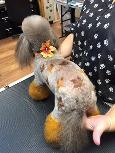-repinned- Fall themed creative dog grooming.