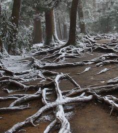 frosty frosty