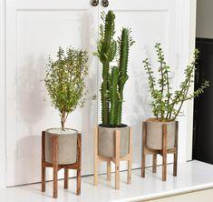 h ngende zimmerpflanzen bilder von anreizenden blumenampeln pflanzen. Black Bedroom Furniture Sets. Home Design Ideas