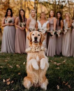 @amandasbridal posted to Instagram: There's always that one Bridesmaid who always tries to steal the show.... 🐶✨ . . 🐕 : @gabsthegolden 📷: @stephphoto.co #abtbridetobe #bridesmaids #bridalparty #idocrew #bridesquad #bridalsquad #girlsfriendsbelike #amandasbridalandtux #bridesmaiddresses #teambride #squadgoals #instawed #coloradowedding #weddingown #denverbride #arvadacolorado #thedailywedding #bridalboutique #bridalshop #weddingstyle #yestothedress #ifoundthegown #t Slip Bridesmaids Dresses, Bridesmaid Dress Colors, Prom Dresses, Wedding Dresses, Wedding Photo Pictures, Wedding Photo Inspiration, Dog Wedding, Wedding Day, Wedding Flowers