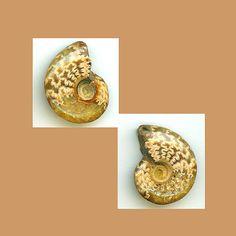 Goniatite Ammonite Fossil ammonite Cephalopoda by BeadCasita, $7.00