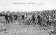Pithiviers, la sucrerie, arrivage des betteraves. (Arch. dép. du Loiret, 11 Fi 5924)