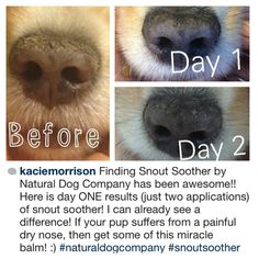 """""""After two years of vet visits and home remedies, my Kate's nose is finally on the mend!!! I will tell all my friends about your amazing product and my vet!""""  - Kacie Morrison from Oregon.  ::::::::::::::::::::::::::::::::::::::::::::::::::::::::::::::::::: You know we love hearing from you, send us your happy story at Bark@NaturalDogCompany.com. #SnoutSoother"""