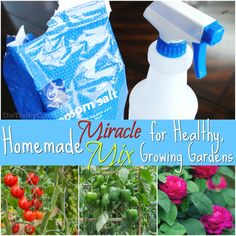 Homemade Epsom Salt Garden Mix: Miracle Solution for Healthy, Growing Gardens