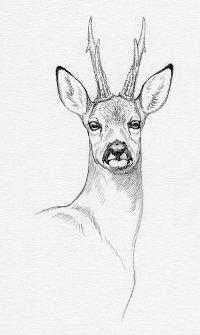 Dessin de chevreuil Chien Springer, Bullet, Moose Art, Menu, Draw, Animals, Plott Hound, Light Project, Farm Animals