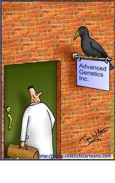 Advanced genetics & a three legged bird