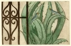 Agave II by Mariann Johansen Ellis, via Flickr