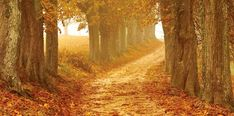Manifesting My Golden Path To Manifest, Paths, The Darkest, Opportunity, Country Roads, Clouds, Change, Times, Future