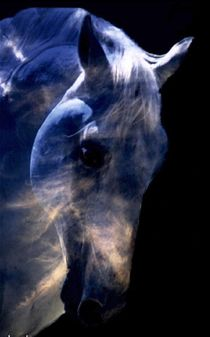 Animals within your dreams hold important energy & messages. Follow the animals to a greater understanding. & meaning.