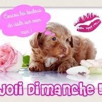 Joli Dimanche ! Good Morning, Teddy Bear, Sunday, Animals, Happy Sunday, Love Pictures, Good Night, Cute Baby Animals, Adorable Animals