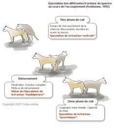 Elevage Des Ames Tranquilles - Eleveur de chiens Basset Hound