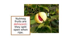 From: Flavor of the Month: Nutmeg
