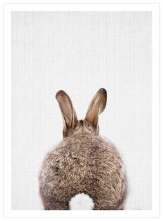 Woodland Bunny Rabbit Tail by Lila & Lola Art Print   Pop Motif