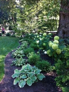 8 Handsome Tips: Garden Landscaping Fire Pits backyard garden vegetable how to build.Backyard Garden Lights Planters cottage garden ideas the secret. Hydrangea Landscaping, Shade Landscaping, Front Yard Landscaping, Landscaping Edging, Wisconsin Landscaping Ideas, Hydrangea Garden, Outdoor Landscaping, Wooded Backyard Landscape, Acreage Landscaping