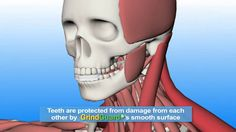 Here in this best solution for Teeth Grinding website we bring of all our customers some of the easiest and simplest of dental care treatments that can cure any problem without any pain or problem. We have enough expertise at the back and best solution for teeth clenching can assure you of suitable solutions within given point of time.