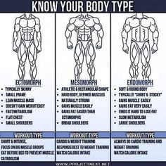 Know Your Body Type? What Is Your Body Type? Ecto Meso Or Endo? - FITNESS HASHTAG