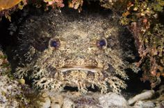 We have a toadfish on exhibit in Maryland: Mountains to the Sea!