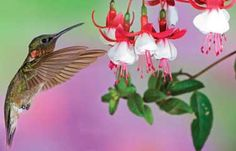 My Mom loves hummingbirds and flowers.  This made me think of her:)