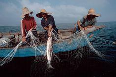 Bruno Barbey, 1998.  Iran, Near Bandar-E-Anzali. Fishermen.