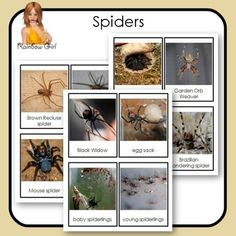 Spiders Cards - there are 20 cards in this set including Black Widow Life Cycle