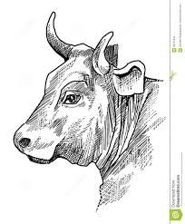 bull head drawing art pinterest cow drawings and paintings