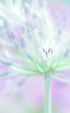 Pastel flower, purple and green Soft Colors, Pastel Colors, Soft Pastels, Foto Macro, Color Menta, Mint Color, Pastel Flowers, Pastel Shades, Pretty Pastel