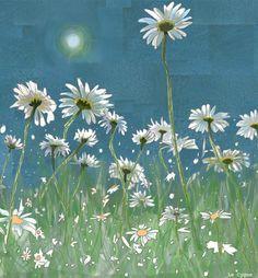 Summer daisies in sunshine by ~LeCygne on deviantART