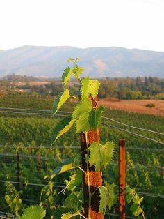 santa barbara county wineries.  love.   a good map:  http://www.sbcountywines.com/wineries/SB_Map_AllWineries.pdf