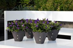 Hebe Addenda Planter Pots