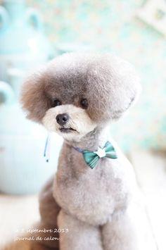 Poodle cut, Japanese style