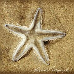 Raksh's Photography!!: Not all the star belongs to the sky!