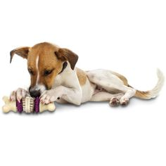 Fun Toys for Dogs, Cats, Puppies and Kittens - PetSafe® UK