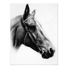 horse head black and white | bw horse head face drawing black white horse face black white farm ...