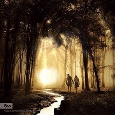 Walk In The Woods, Nature Photos, Shadows, Trees, Natural, Painting, Drill Bit, Darkness, Painting Art