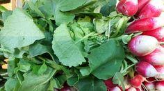Potage aux fanes de radis